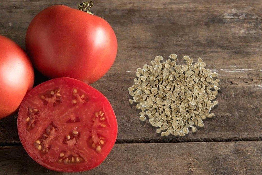 Срок годности семян томатов
