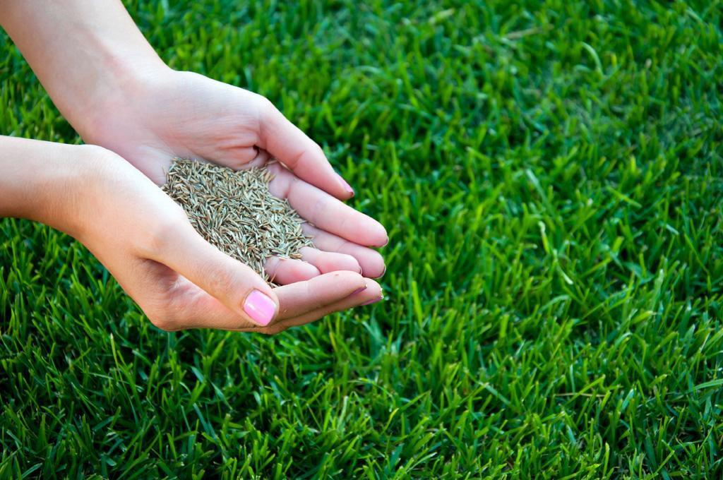 Срок годности семян газонной травы