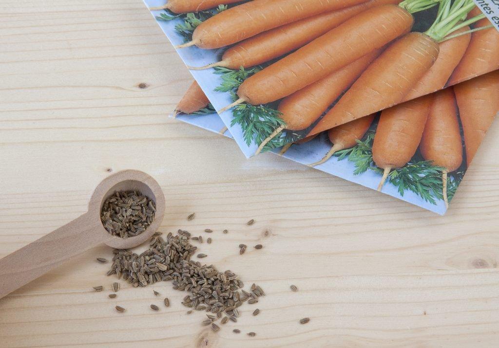срок годности семян моркови